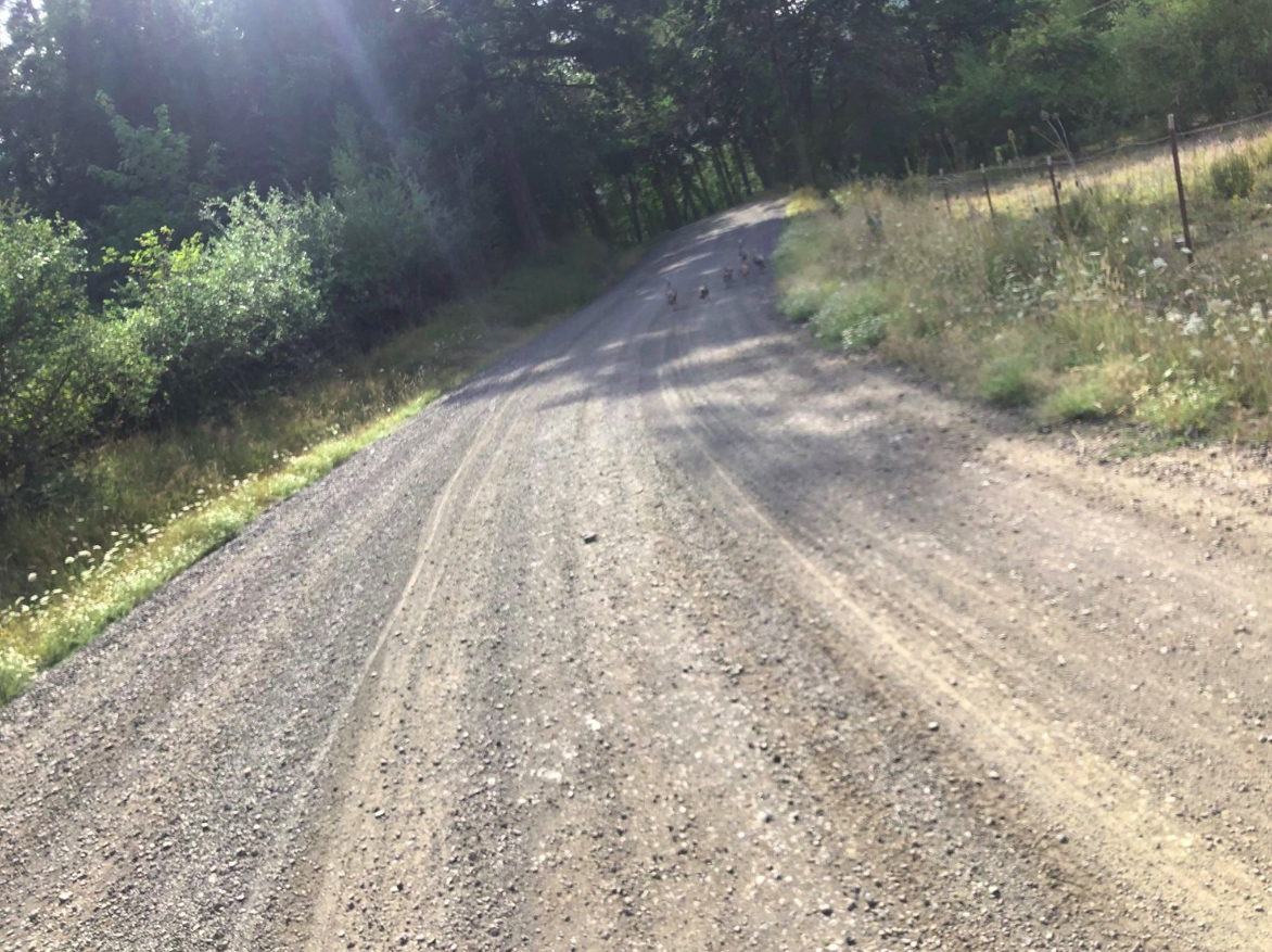 A stretch of sunlit gravel on the Swift Summit 2019 200 mile route